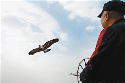 """未央宫上空群""""鹰""""展翅飞"""