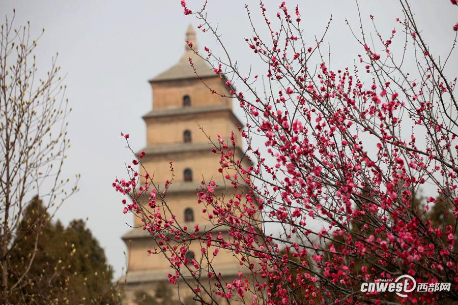 二月里古城西安春色萌动