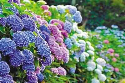 亚洲无ma区春暖花开_春暖花开又到赏花好时节 这些花你认识吗?